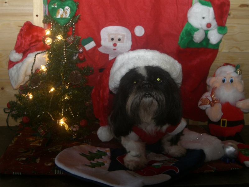 CHRISTMAS COMPETITION Dogs_c12