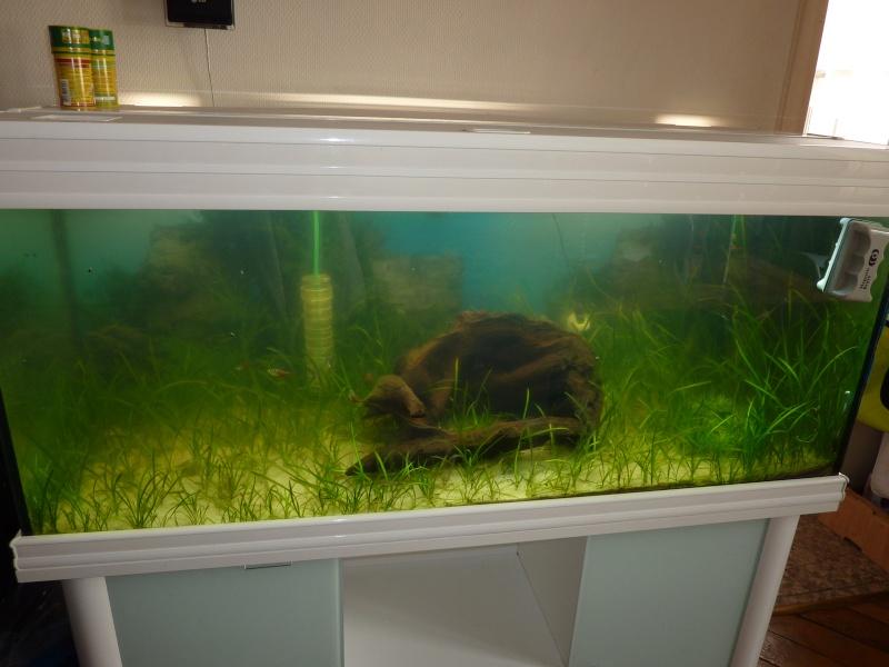 Algorem de tetra pond contre l'eau verte P1020610