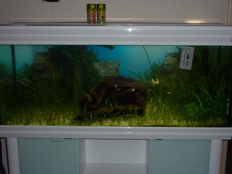 Algorem de tetra pond contre l'eau verte P1020611