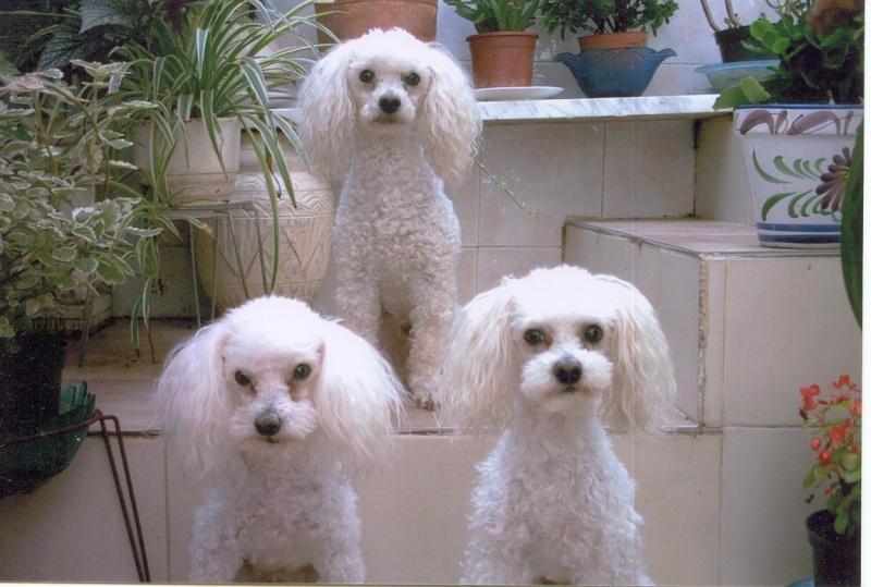 Nuestras mascotas Perros10