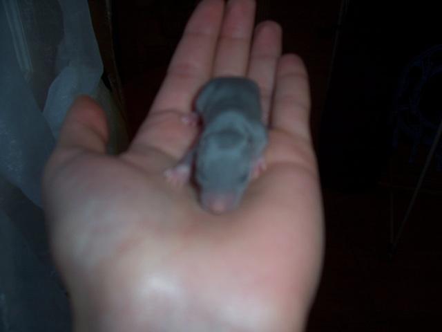 Julliette X Ratatouille 1 semaine déjà (37) 100_3438