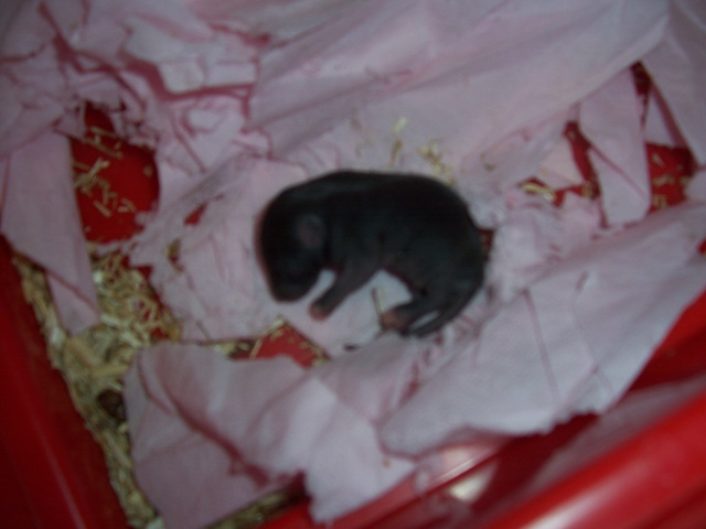 Julliette X Ratatouille 1 semaine déjà (37) 100_3442