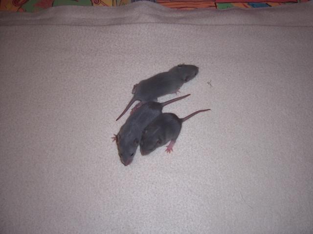 Julliette X Ratatouille 1 semaine déjà (37) 100_3447