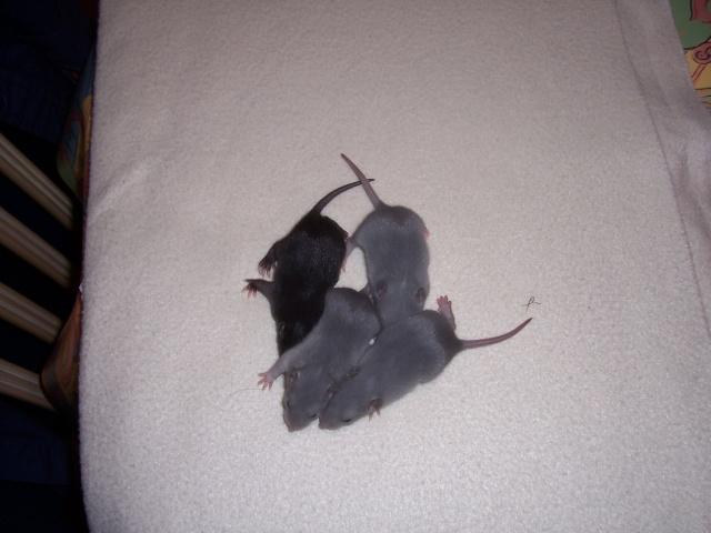 Julliette X Ratatouille 1 semaine déjà (37) 100_3448