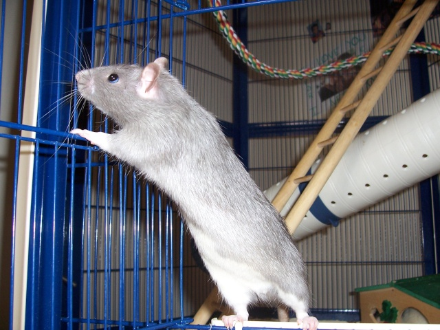 Julliette X Ratatouille 1 semaine déjà (37) Ratato13