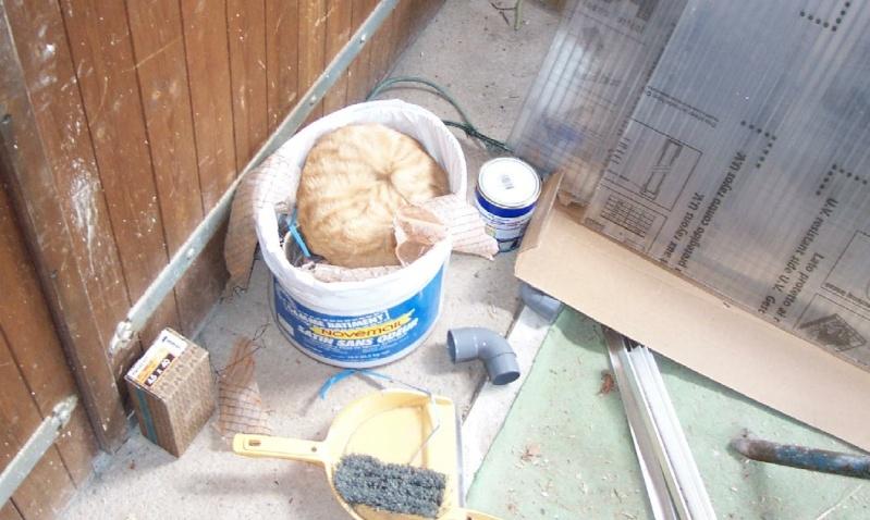 L'art de faire la sieste (par nos amis les chats)  Chat_d11