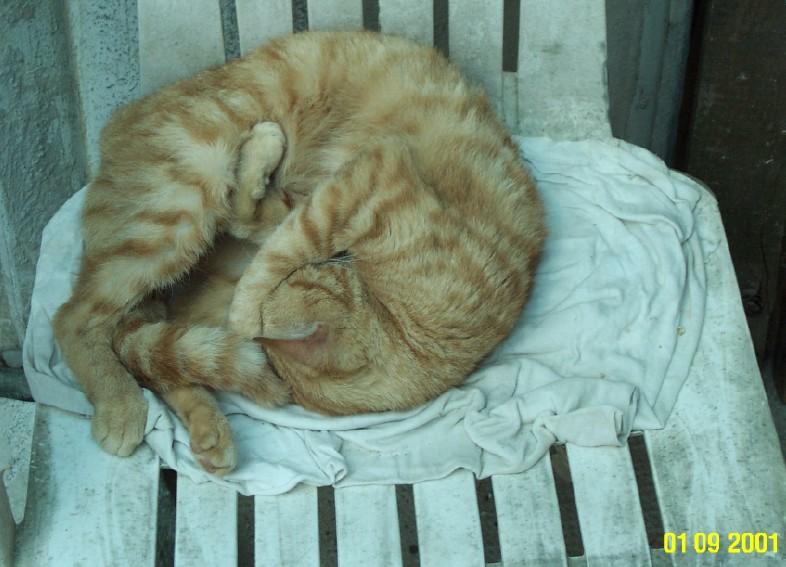 L'art de faire la sieste (par nos amis les chats)  Chat_d12
