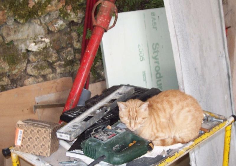 L'art de faire la sieste (par nos amis les chats)  Chat_d13