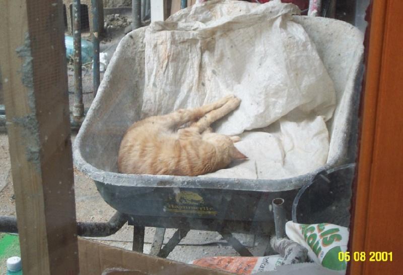 L'art de faire la sieste (par nos amis les chats)  Chat_d15