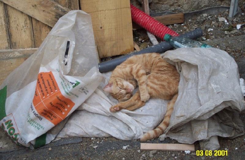L'art de faire la sieste (par nos amis les chats)  Chat_d16