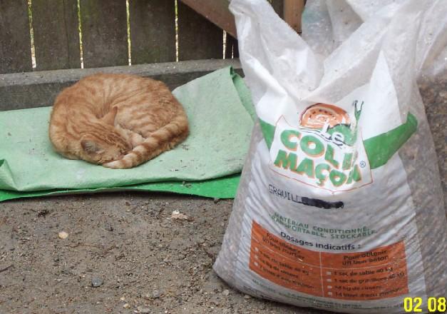 L'art de faire la sieste (par nos amis les chats)  Chat_d17