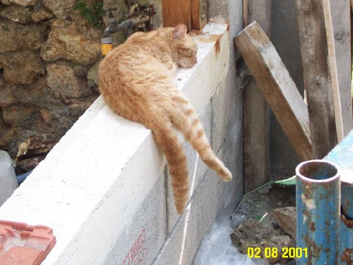 L'art de faire la sieste (par nos amis les chats)  Chat_d18