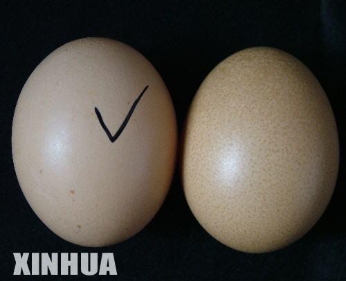 ( Artikel tentang Kesehatan ) Telur_10