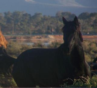 South Australian Standardbred Owners