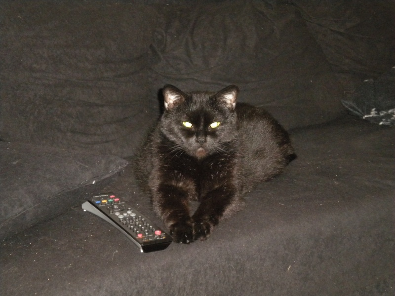 SOREN, 8 ans, câlinou FIV à adopter sans chat (27) Soren311