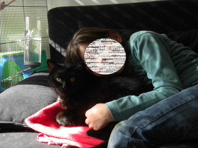 SOREN, 8 ans, câlinou FIV à adopter sans chat (27) Soren413