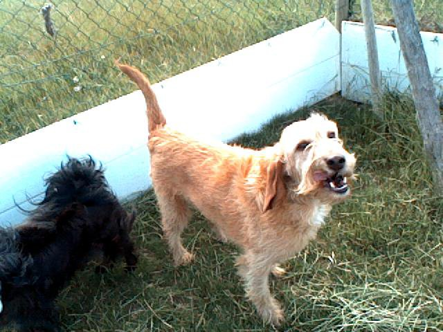 Urgent Howart et Acadie doivent trouver une famille ainsi que trois chats Howart19