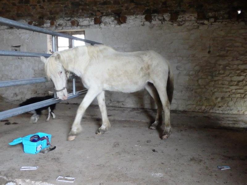 VENUS - ONC poney née en 1987 - adoptée en octobre 2012 par souris73 - Page 6 Venus710