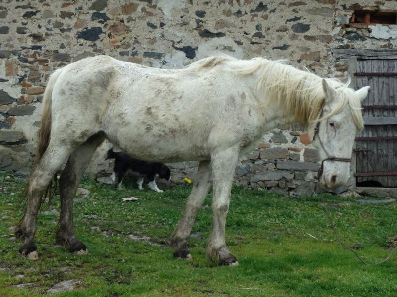 VENUS - ONC poney née en 1987 - adoptée en octobre 2012 par souris73 - Page 6 Venus910