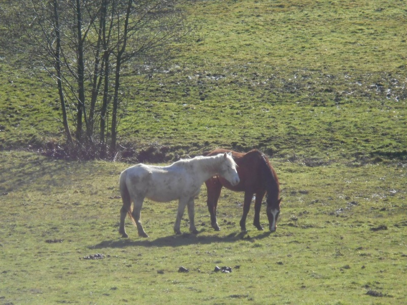 VENUS - ONC poney née en 1987 - adoptée en octobre 2012 par souris73 - Page 6 Venus_10