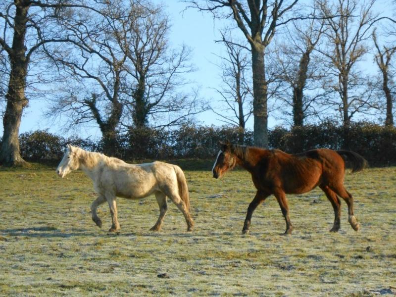 VENUS - ONC poney née en 1987 - adoptée en octobre 2012 par souris73 - Page 6 Venus_11