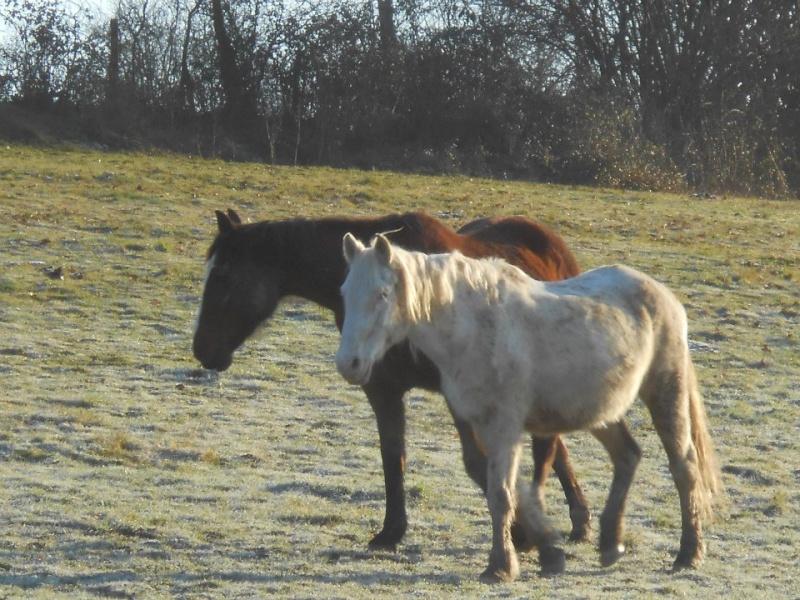 VENUS - ONC poney née en 1987 - adoptée en octobre 2012 par souris73 - Page 6 Venus_12