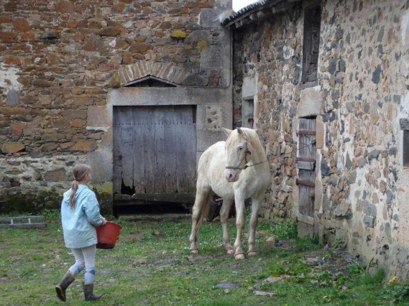 VENUS - ONC poney née en 1987 - adoptée en octobre 2012 par souris73 - Page 6 Venus_14