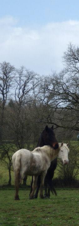 VENUS - ONC poney née en 1987 - adoptée en octobre 2012 par souris73 - Page 6 Venus_16