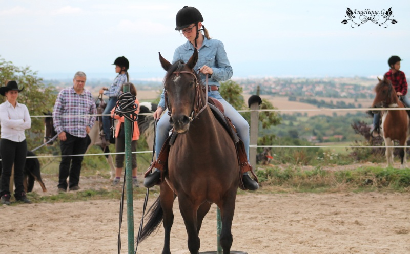 Photo concours d'Equitation Western Img_0911