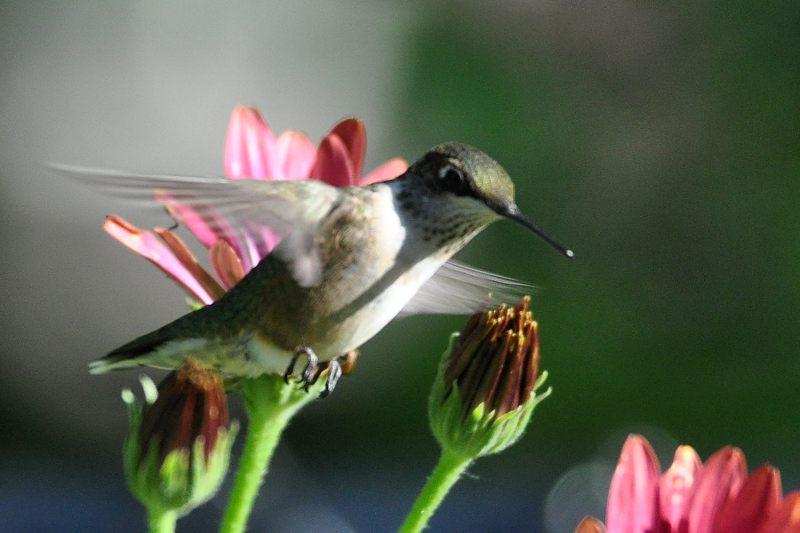 Colibri 04-09-10
