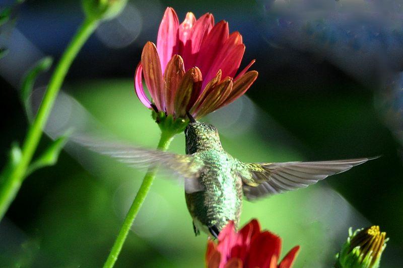 Colibri 04-09-11
