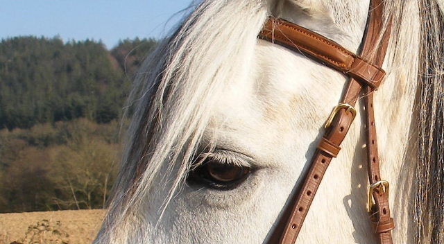 CONCOURS PHOTOS, L'oeil des chevaux ! 01010