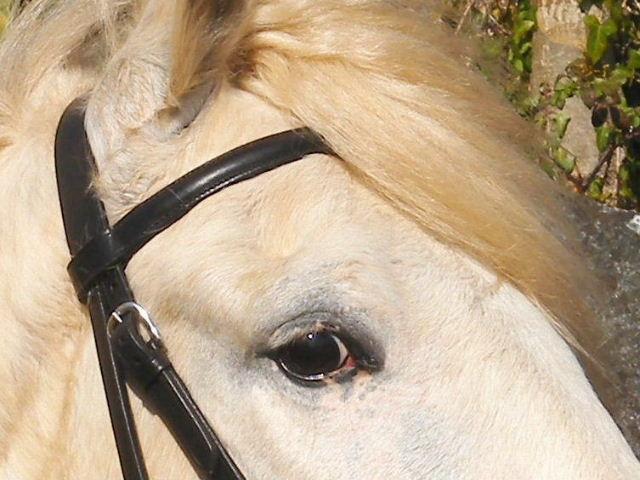 CONCOURS PHOTOS, L'oeil des chevaux ! 09040510