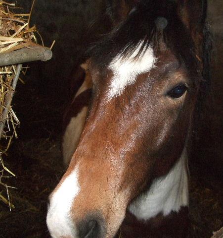 Poney pie de 4 ans (VENDU) Le papi part aussi !!! 2011_026
