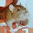 mes crottes - Page 2 Rat310