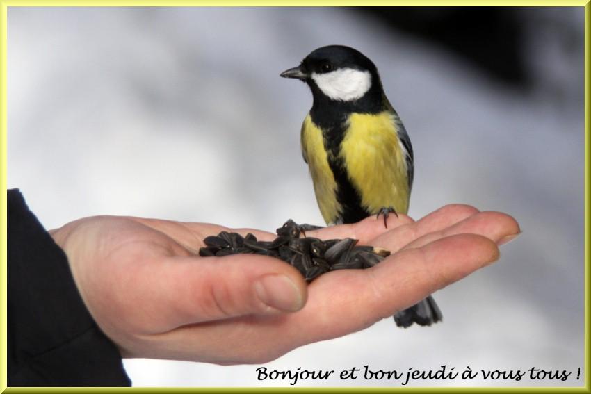 Les bonjours et contacts jounaliers du Mois de Janvier 2019 10011910