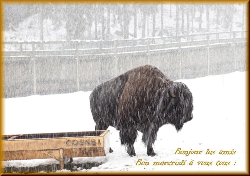 Les bonjours et contacts jounaliers du Mois de Janvier 2019 - Page 2 30011910