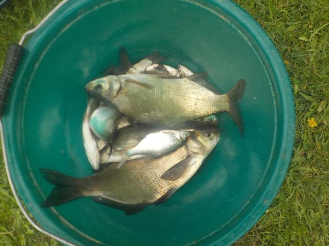 Jeudi 16 août 2018 pêche et grillades au Migron. Dscn1316