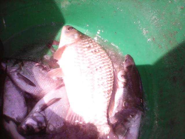 Jeudi 16 août 2018 pêche et grillades au Migron. Img00018