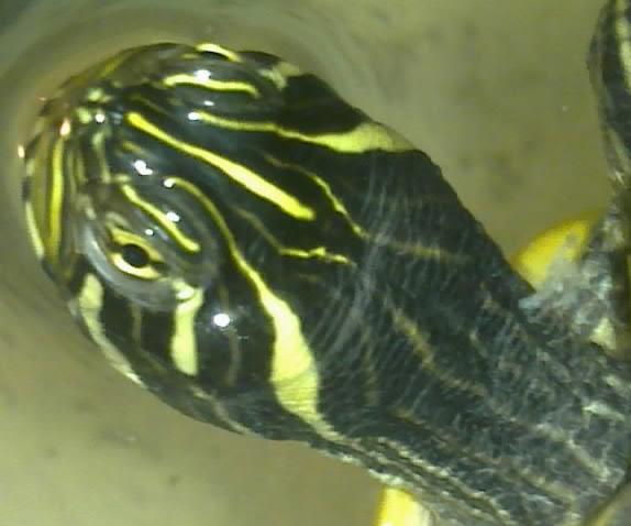 Mon Aquarium & mes Tortues 04022018