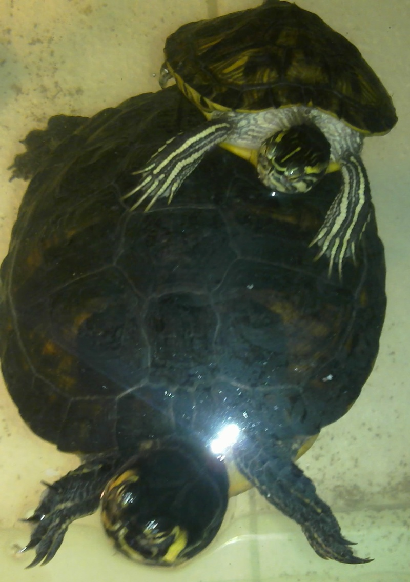 Mon Aquarium & mes Tortues 04022019