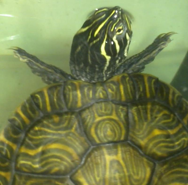Mon Aquarium & mes Tortues 04022020