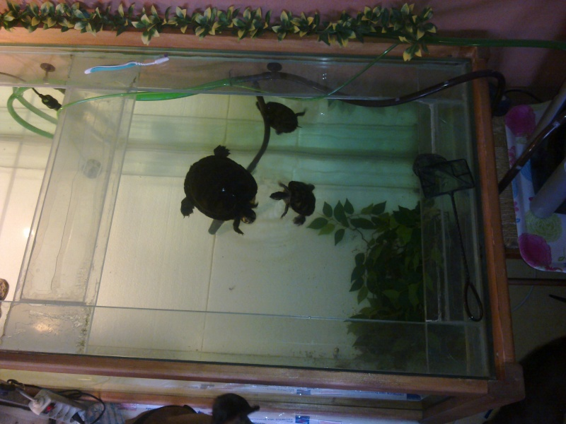 Mon Aquarium & mes Tortues - Page 2 17022023