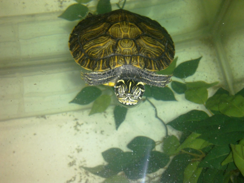 Mon Aquarium & mes Tortues - Page 2 17022024
