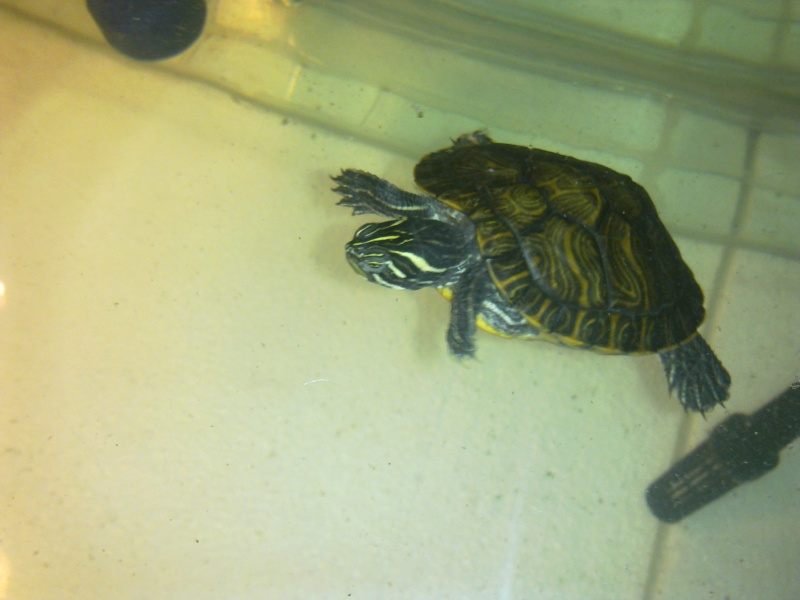 Mon Aquarium & mes Tortues - Page 2 17022025
