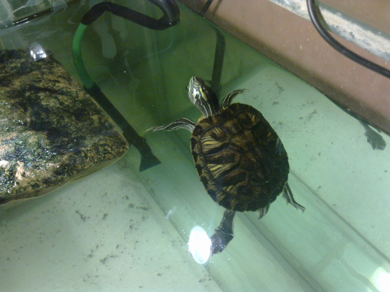 Mon Aquarium & mes Tortues - Page 2 17022026