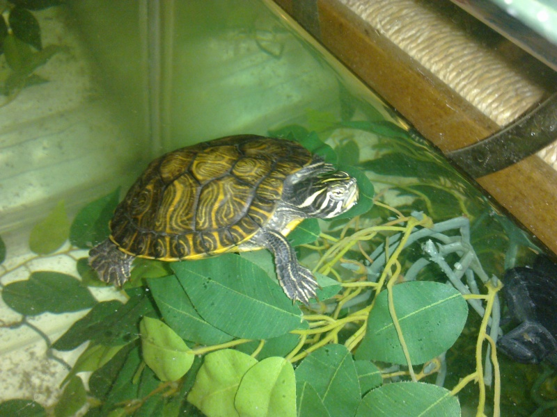 Mon Aquarium & mes Tortues - Page 2 17022027