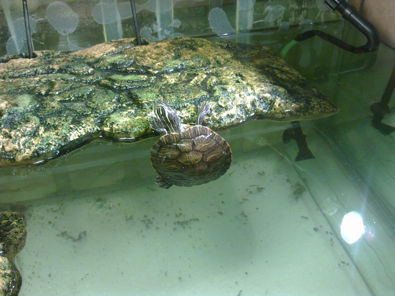 Mon Aquarium & mes Tortues - Page 2 17022029