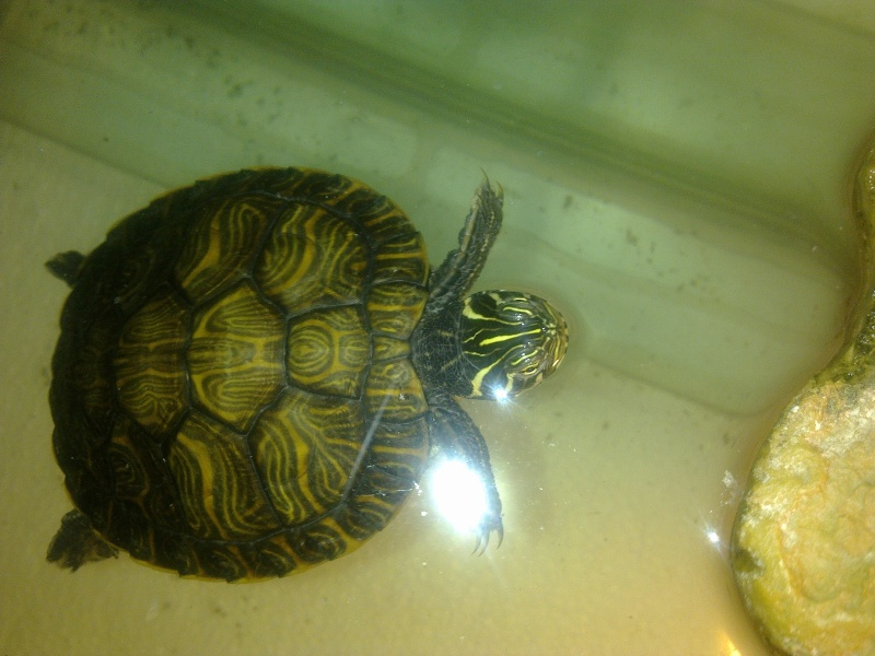 Mon Aquarium & mes Tortues - Page 2 17022032