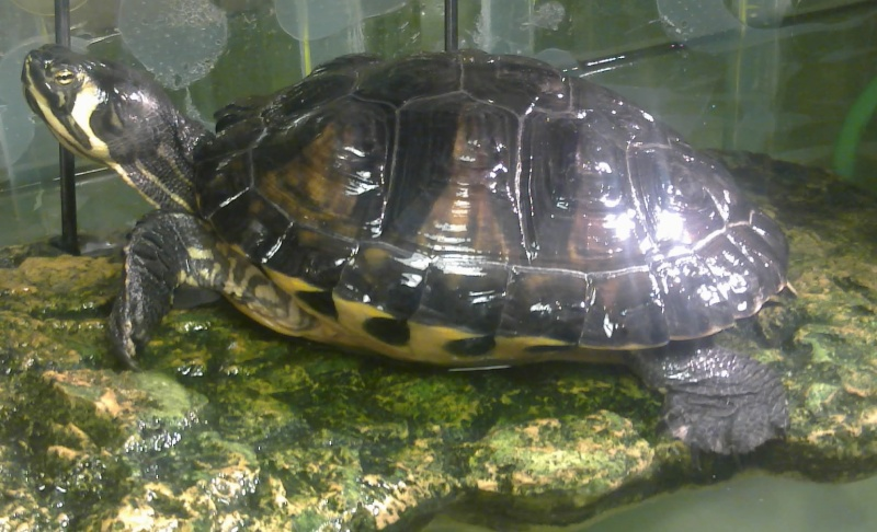 Mon Aquarium & mes Tortues - Page 2 17022033